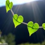 Voyance amour par Martin Sylvie Vérité de Bretagne